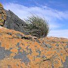 Orange Rock Moss against Blue Sky by Shelley Karutz