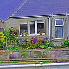 A Lerwick Garden in summer by Twscats