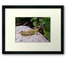 Grasshopper on White Stone Framed Print