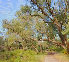 Mid winter and a tree overhangs the Ghost House trail by georgieboy98