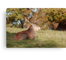 The Boss Stag (Red Deer) Canvas Print