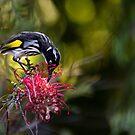 Afternoon Nectar Feast by Sandra Chung