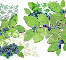 Blueberries from Nova Scotia by PrivateVices