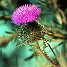 Late Light Thistle by velveteagle