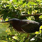 hunting bird - pájaro cazando by Bernhard Matejka