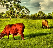 Cows At Pasture by TerryDavey