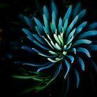 The Mermaid's Flower by Felicia Moore