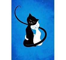 Blue White And Black Cats In Love Photographic Print