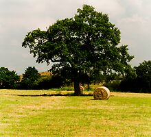 Tree and Bale by David J Knight