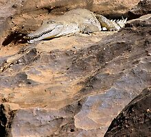 Croc on the Rock by Robert Elliott