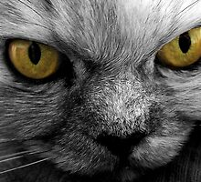 Straight in the eyes - II by Gili Orr