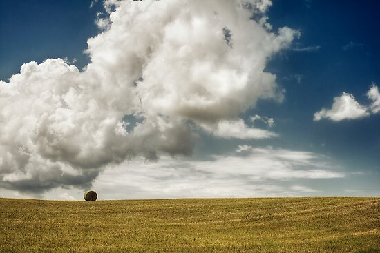 Lonely in the field by Gino Caron