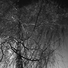 Tree against a dark English sky by Robert Gipson
