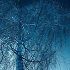 Tree in blue light  by Robert Gipson