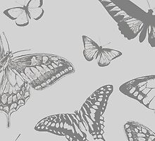 Butterfly (Butterflies), Insects - Pale Gray by sitnica