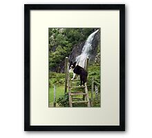 Indy at Aber Waterfalls Framed Print