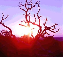 Sunset through Silhouetted Tree in Desert (1) by SteveOhlsen