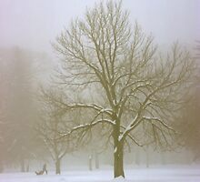 Foggy Morning Winter Landscape (7) by SteveOhlsen
