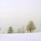 Trees in Snow and Fog by SteveOhlsen