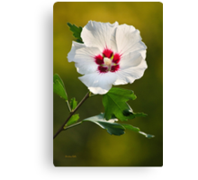 Rose of Sharon Flower Canvas Print