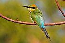 Rainbow Bee-eater ~ The Spectrum by Robert Elliott