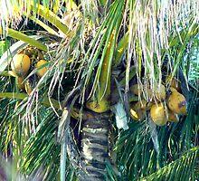 Coconuts Galore by Virginia McGowan