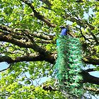 bird in a tree by dinghysailor1