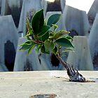Concrete Jungle - Color by Elba Parra