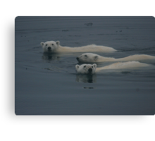 Polar Bear Swim    Canvas Print