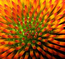 Nature's Candy Corn by Darlene Ruhs