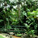Tamborine Botanical Gardens by Virginia McGowan