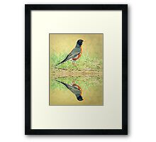 American Robin At Water's Edge Framed Print