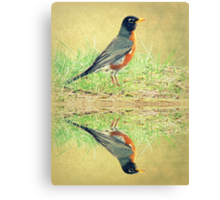 American Robin At Water's Edge Canvas Print