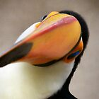 The Toucan by Laura Kelk