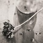 Still Life Black and White Seed Pod by Elizabeth Thomas