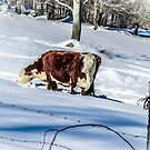 Winter Grazing by Rebecca Bryson