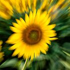 Sunflower Burst by KellyHeaton