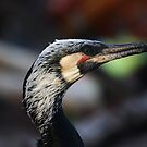 Fishing Cormorant by Christopher Meder