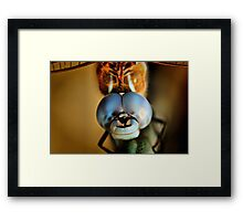 Dragonfly Up Close Framed Print