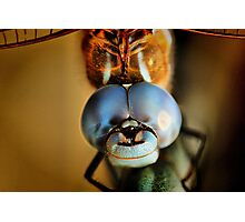 Dragonfly Up Close Photographic Print