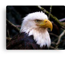 Portrait Of An Eagle III  Canvas Print