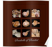 Seashells of Sanibel Poster