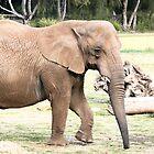 Elephant by kneeknee
