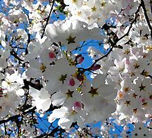 Blissful Blossoms by Lorrie Morrison