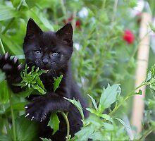 Me iz wild Panther - Me Eatz U! by Zeanana