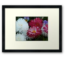 Pink and white Daisy Framed Print