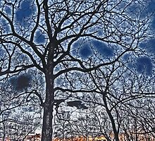 Sunset Beyond The Bare Trees High Contrast Paintography by Adri Turner