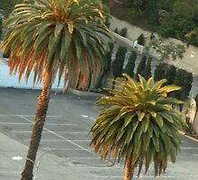 Hollywood Palms by Ruby Tuesday