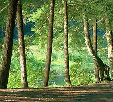 Shoreline Trees by RLHall