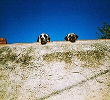 Two Dogs by spiritedly